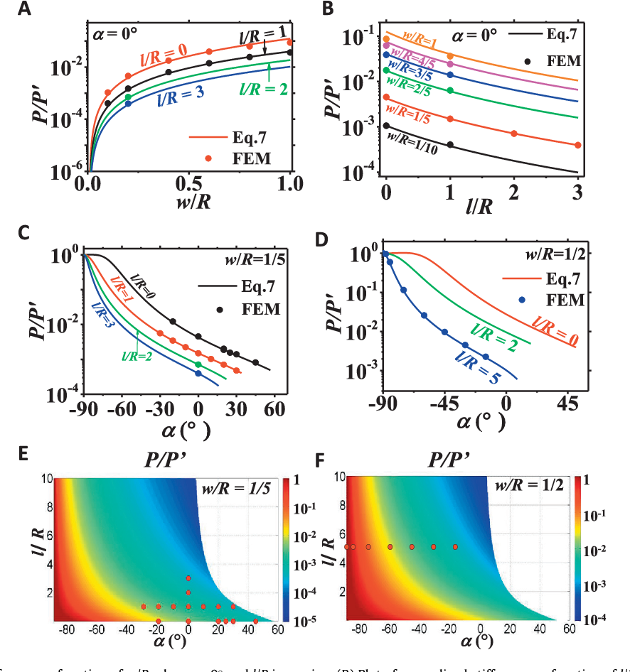 Fig. 3. (A) Plot of normalized stiffness as a function of w/R when a = 0 and l/R is varying. (B) Plot of normalized stiffness as a function of l/R when a = 0 and w/R is varying. (C) Plot of normalized stiffness as a function of a when w/R = 1/5 and l/R is varying. (D) Plot of normalized stiffness as a function of a when w/R = 1/2 and l/R is varying. (E) Contour plot of normalized stiffness as a function of a and l/R when w/R = 1/5. The red dots represent the cases that have been modeled by FEM. The blank region represents the inaccessible shapes due to the non-overlapping constraint. (F) Contour plot of normalized stiffness as a function of a and l/Rwhenw/R = 1/2. (For interpretation of the references to colour in this figure legend, the reader is referred to the web version of this article.)