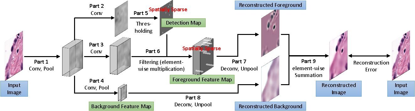 Figure 3 for Sparse Autoencoder for Unsupervised Nucleus Detection and Representation in Histopathology Images