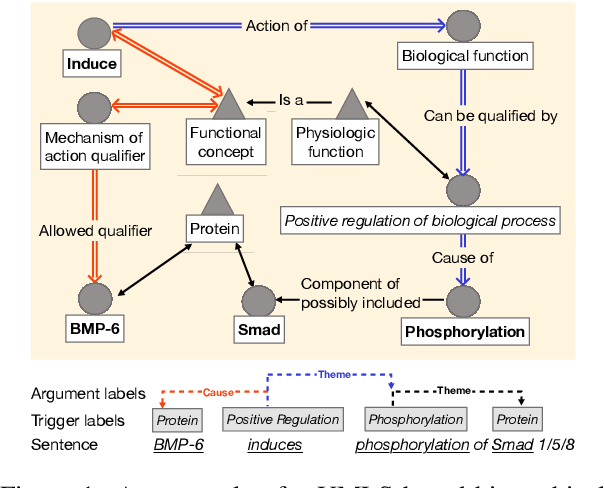 Figure 1 for Biomedical Event Extraction with Hierarchical Knowledge Graphs