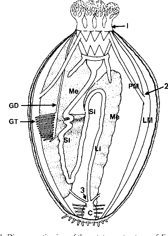 Figure 1 From The Morphology Of Autotomy Structures In The Sea