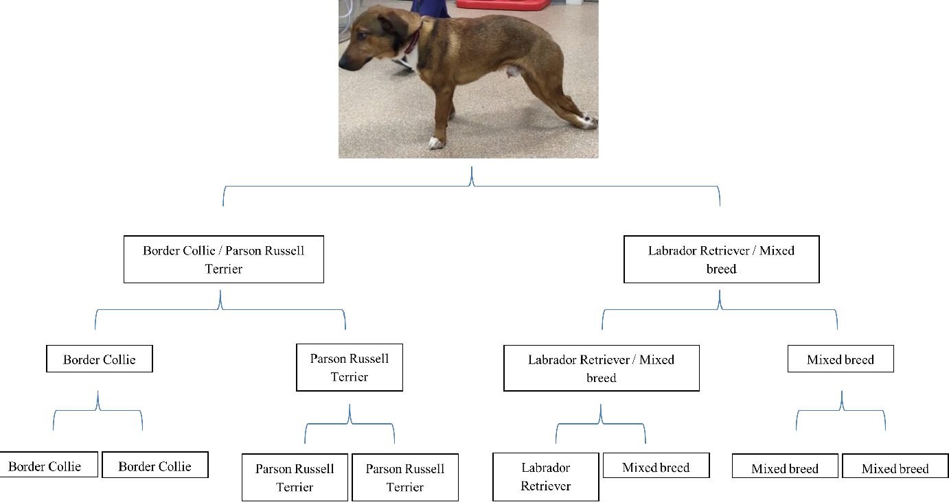 Two mixed breed dogs with sensory neuropathy are homozygous