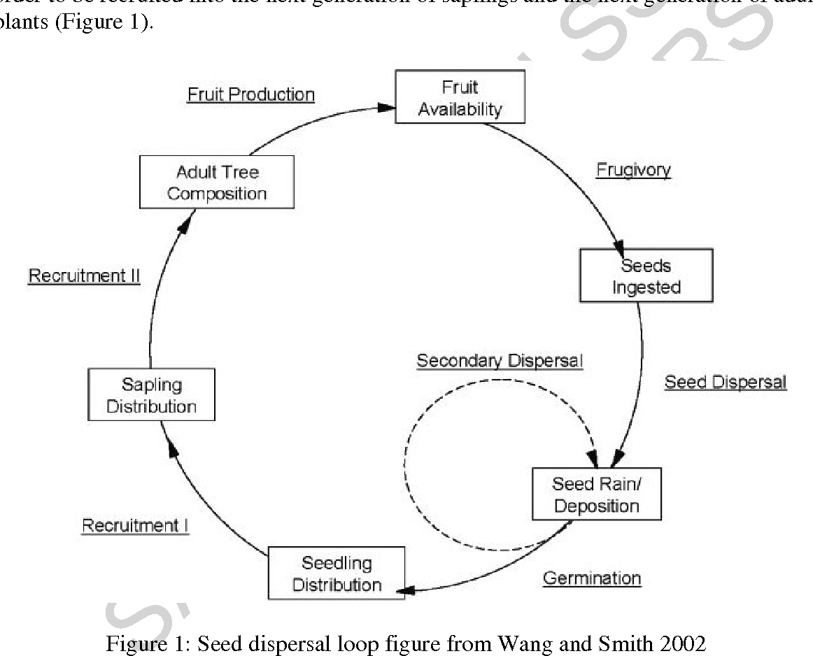 Figure 1: Seed dispersal loop figure from Wang and Smith 2002