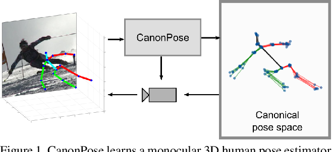 Figure 1 for CanonPose: Self-Supervised Monocular 3D Human Pose Estimation in the Wild