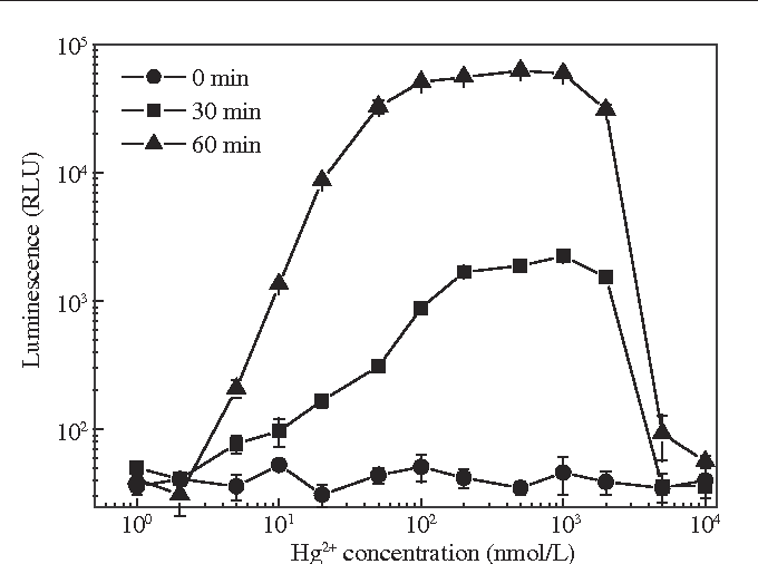 Fig. 2 – Luminescence (relative luminescence unit, RLU) of pTHE30–E. coli at different time after addition of Hg2+.