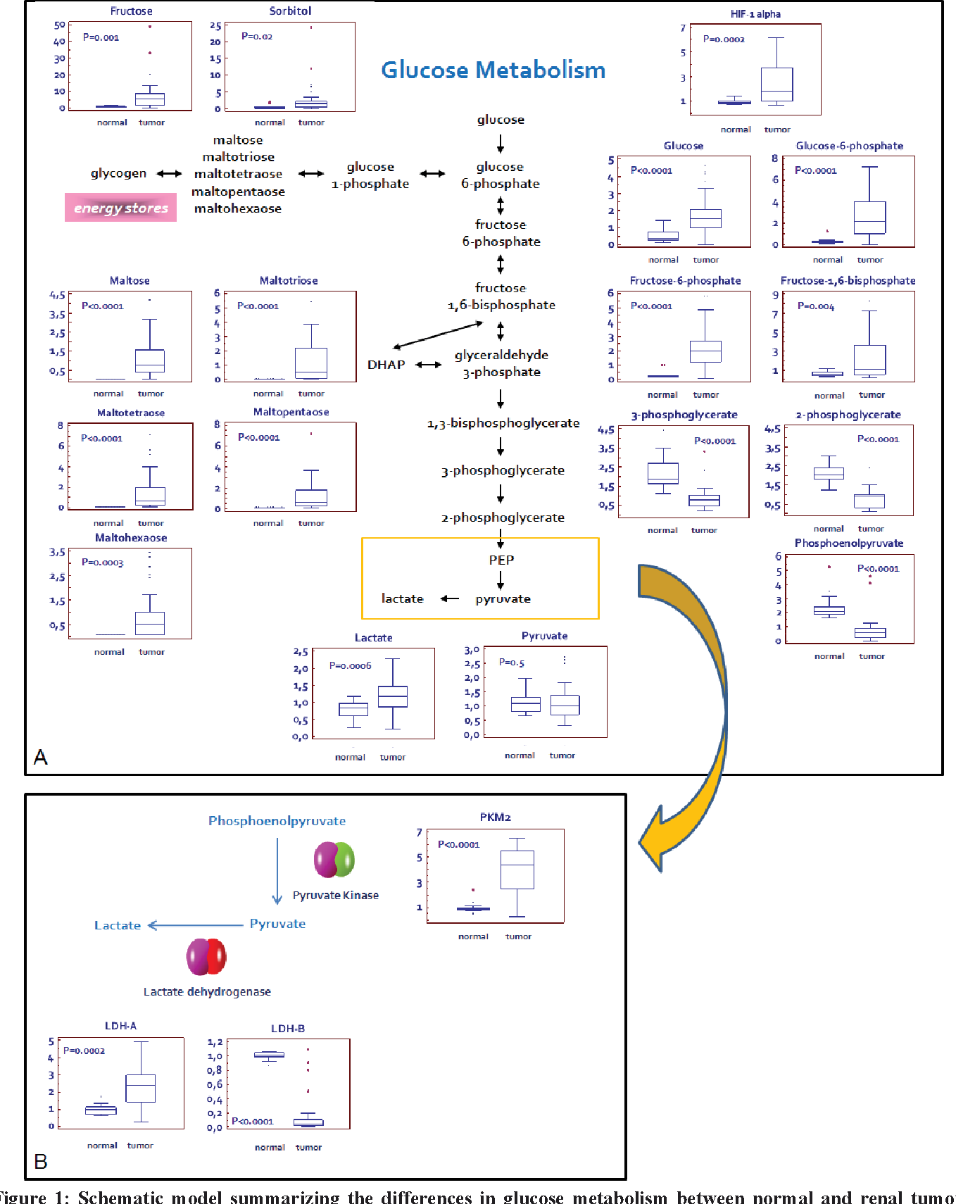 Figure 1 From Metabolomic Profile Of Glycolysis And The Pentose Circuit Diagram 3 0 Schematic Model Summarizing Differences In Glucose Metabolism Between Normal Renal Tumor