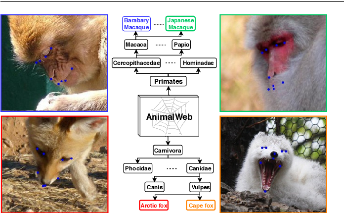 Figure 1 for AnimalWeb: A Large-Scale Hierarchical Dataset of Annotated Animal Faces