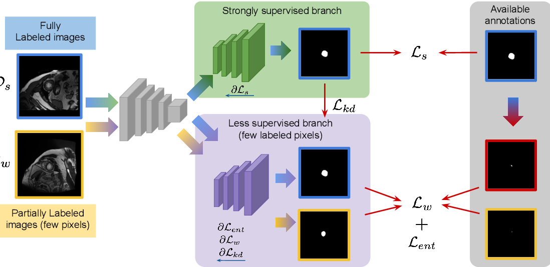 Figure 1 for Mixed-supervised segmentation: Confidence maximization helps knowledge distillation
