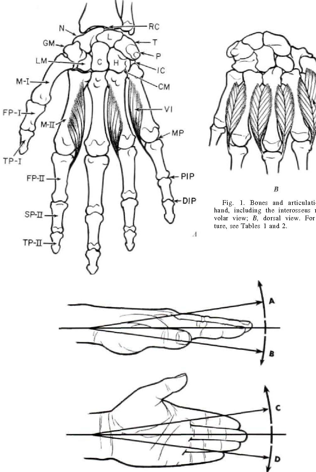 The Anatomy And Mechanics Of The Human Hand Semantic Scholar