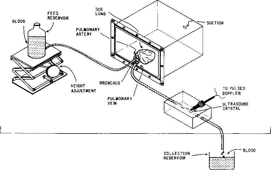 FIG. 1. The perfusion system. Bl()od flowed from the supply reservoir, through a lobe of lung, past the ultrasound transducer, and emptied into the collection reservoir.