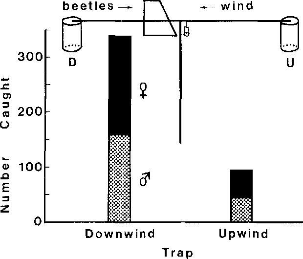 Upwind Flight Orientation To Pheromone In Western Pine Beetle Tested