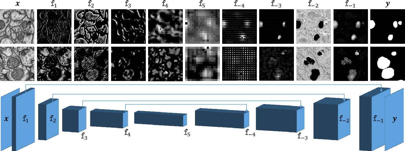 Figure 1 for Domain Adaptive Segmentation in Volume Electron Microscopy Imaging