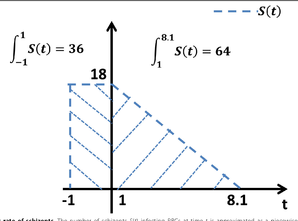 Figure 8 Burst rate of schizonts. The number of schizonts S(t) infecting RBCs at time t is approximated as a piecewise linear function according to experimental observations.