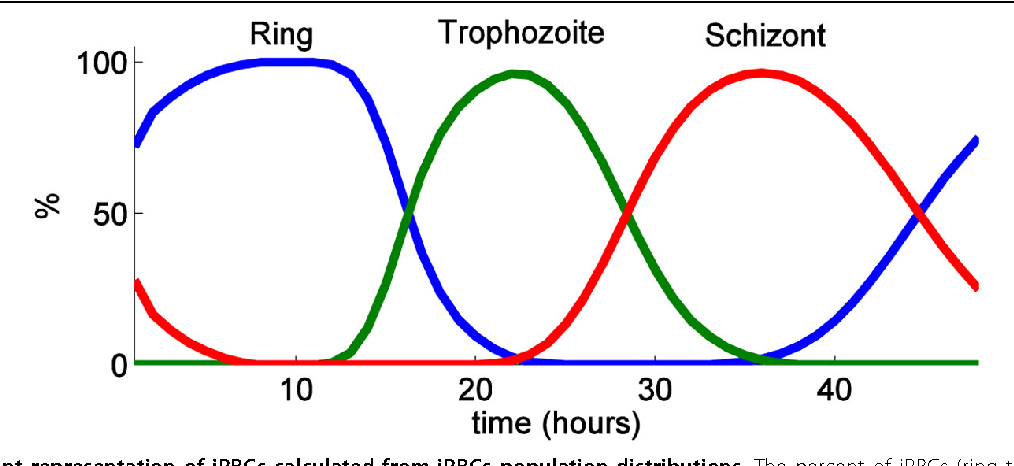 Figure 9 Percent representation of iRBCs calculated from iRBCs population distributions. The percent of iRBCs (ring trophozoite, and schizont) calculated from iRBCs population N(t, ℓre) with s = 0.1.