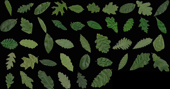 Figure 1 for Deep-Plant: Plant Identification with convolutional neural networks