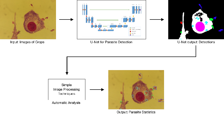 Figure 2 for Leishmaniasis Parasite Segmentation and Classification using Deep Learning