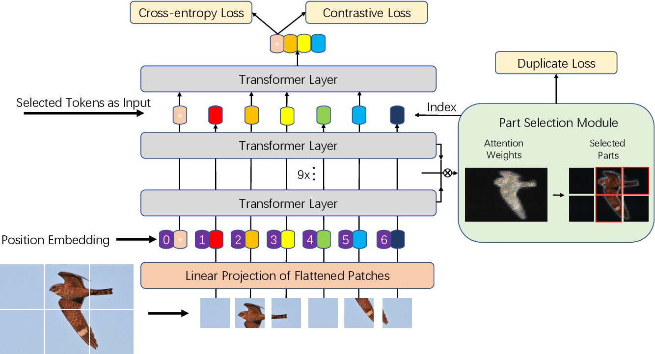 Figure 3 for TransFG: A Transformer Architecture for Fine-grained Recognition