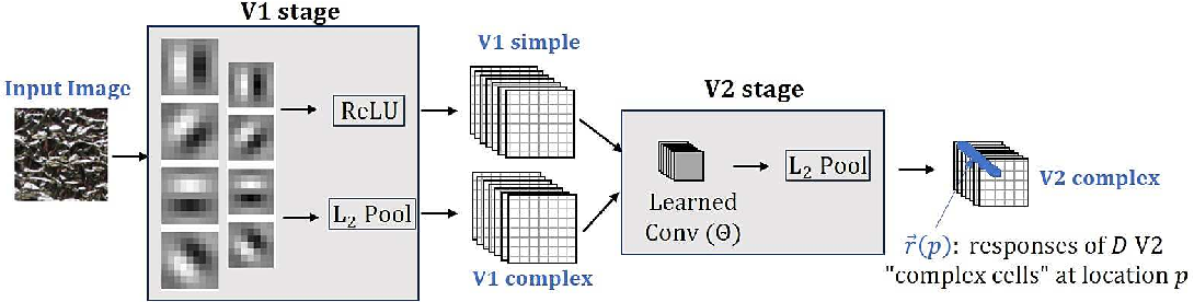 Figure 1 for Self-Supervised Learning of a Biologically-Inspired Visual Texture Model