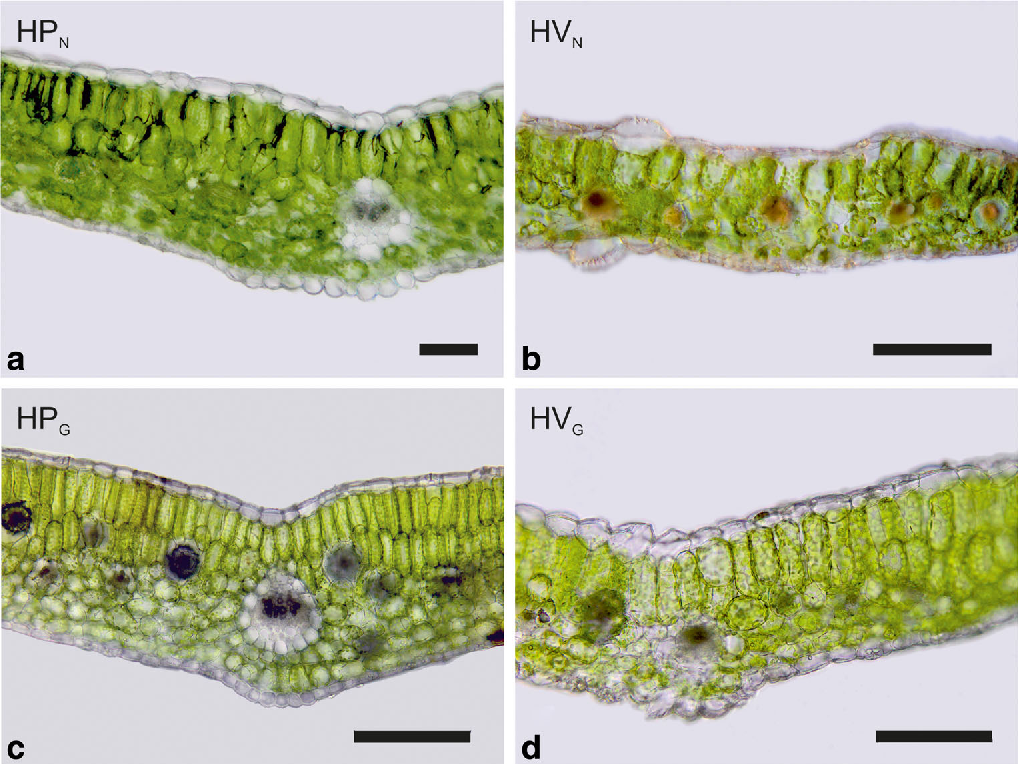 Leaf anatomy of two reciprocally non-monophyletic mountain plants ...