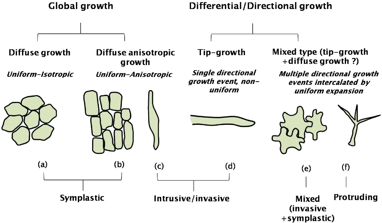 types of plant cells
