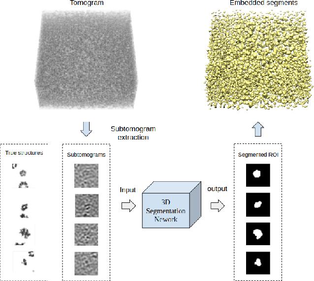 Figure 1 for Deep learning based supervised semantic segmentation of Electron Cryo-Subtomograms