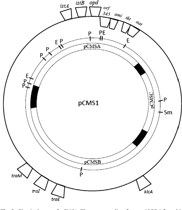 Figure 3 From Indigenous Organophosphate Degrading Opd Plasmid