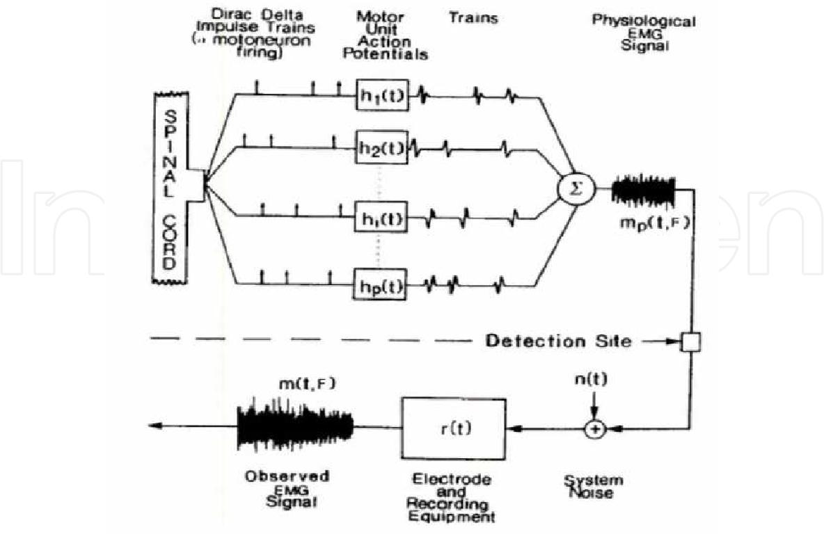 Artificial Human Arm Driven By Emg Signal Semantic Scholar Figure 1 Block Diagram Of The Sensor