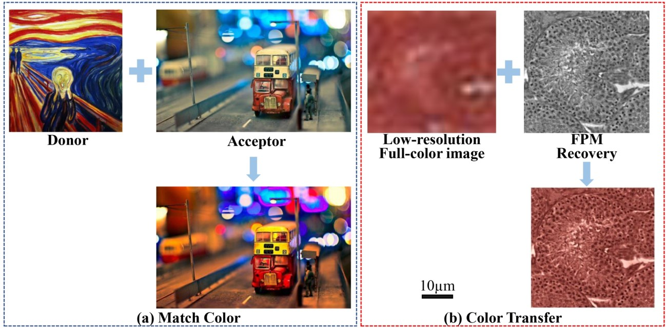 Figure 2 for High-throughput fast full-color digital pathology based on Fourier ptychographic microscopy via color transfer