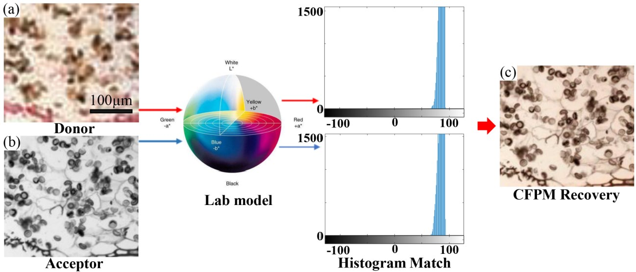 Figure 3 for High-throughput fast full-color digital pathology based on Fourier ptychographic microscopy via color transfer