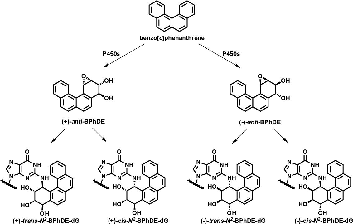 Figure 7.1 Metabolic activation of benzo[c]phenanthrene to diol epoxide leading to the formation of N2-BPhDE-dG adducts.