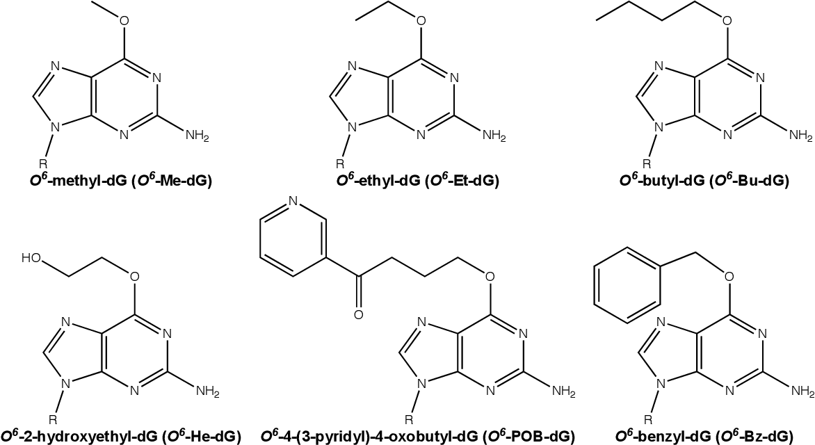 Figure 1.4 Examples of O6-alkyl-dG lesions that are recognized and repaired by AGT.