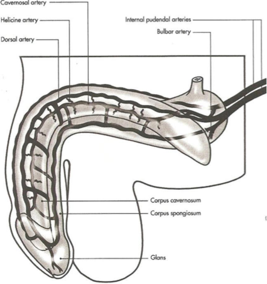 TESSA: Penis multiple sclerosis