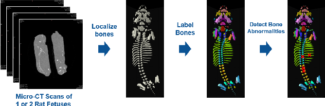 Figure 1 for Effort-free Automated Skeletal Abnormality Detection of Rat Fetuses on Whole-body Micro-CT Scans