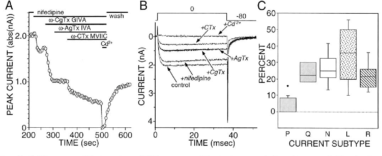 Figure 4 from muscarinic m2m4 receptors reduce n and p type ca2 chat interneurons exhibited several types of hva type currents a ccuart Gallery