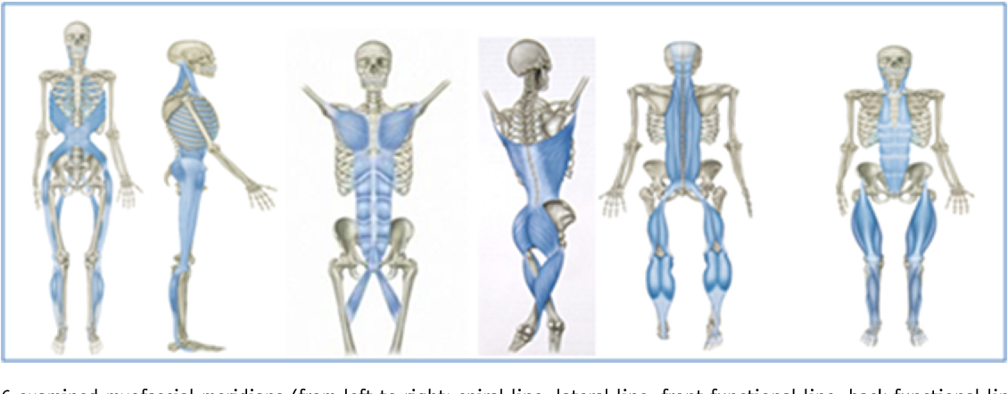 What Is Evidence Based About Myofascial Chains A Systematic Review