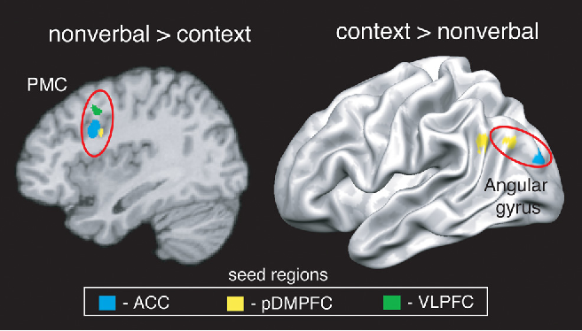 Figure 4. Brain regions whose connectivity with cognitive control-related seed regions was positively related to reliance on nonverbal or contextual cues during decisions about incongruent cues. PMC, Premotor cortex.