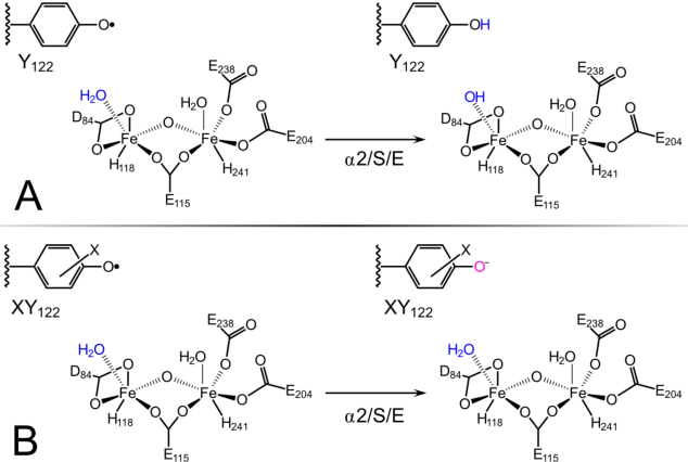 Formal Reduction Potentials Of Difluorotyrosine And