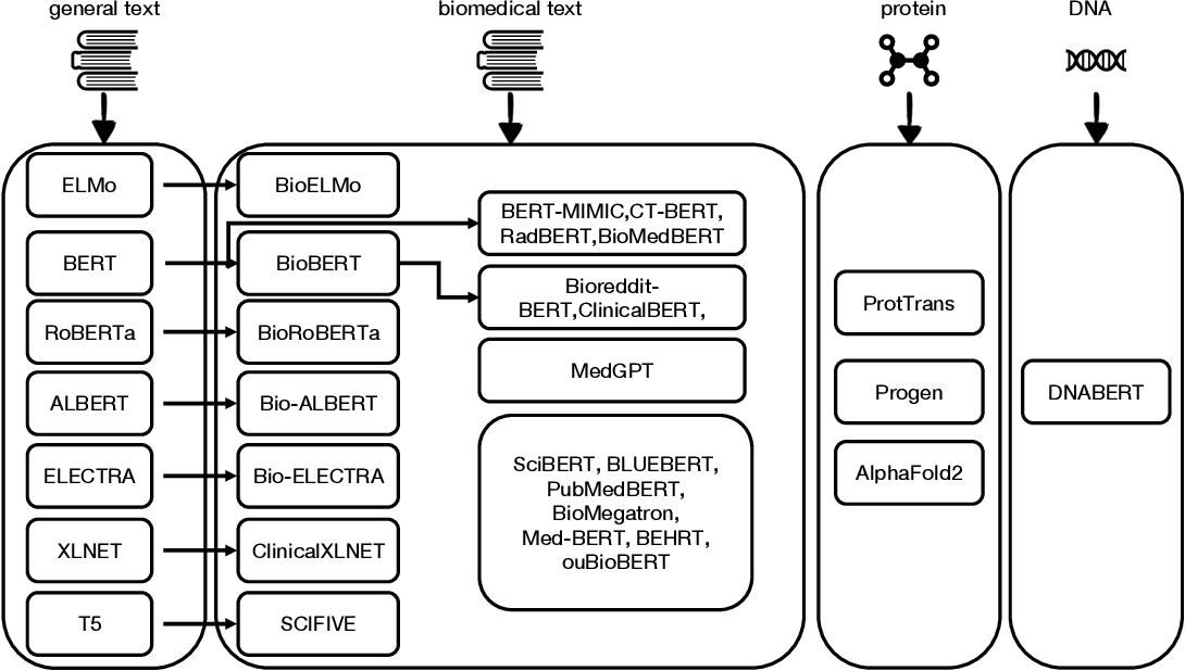 Figure 3 for Pre-trained Language Models in Biomedical Domain: A Systematic Survey