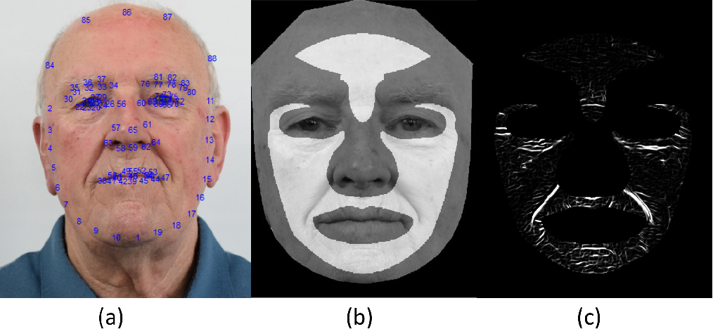 Figure 3 for Automated Assessment of Facial Wrinkling: a case study on the effect of smoking