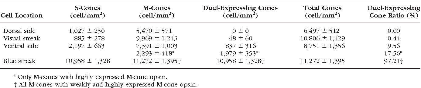 TABLE 1. S- and M-Cone Distribution in the Rabbit Retina