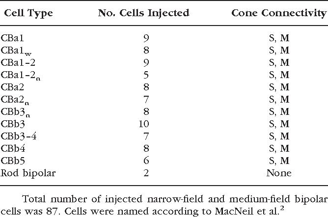 TABLE 2. Summary of Narrow- and Medium-Field Bipolar Cells Examined