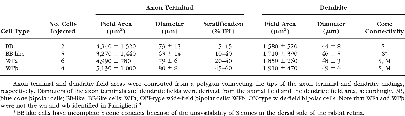 TABLE 3. Summary of Wide-Field Types of Bipolar Cells Examined