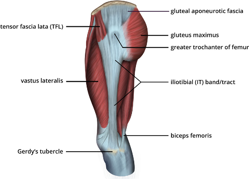 The Iliotibial Tract Imaging Anatomy Injuries And Other