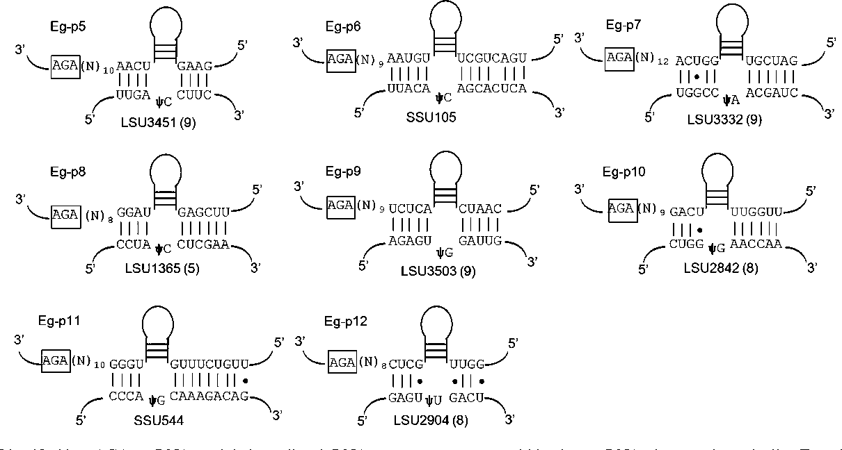 Clustered Organization Polycistronic Transcription And Evolution