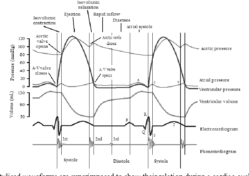 Figure 3 from left ventricular function s relation to load stylised waveforms are superimposed to show their relation during a cardiac cycle ccuart Image collections