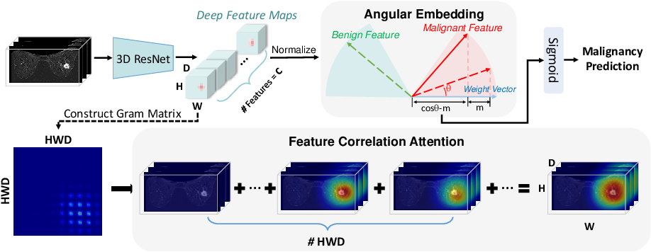 Figure 1 for Deep Angular Embedding and Feature Correlation Attention for Breast MRI Cancer Analysis