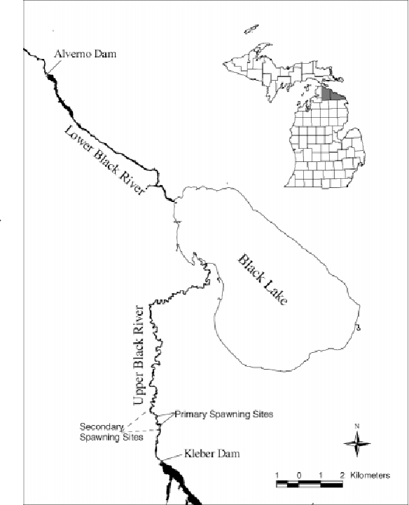 Characteristics Of Spawning Lake Sturgeon In The Upper Black River