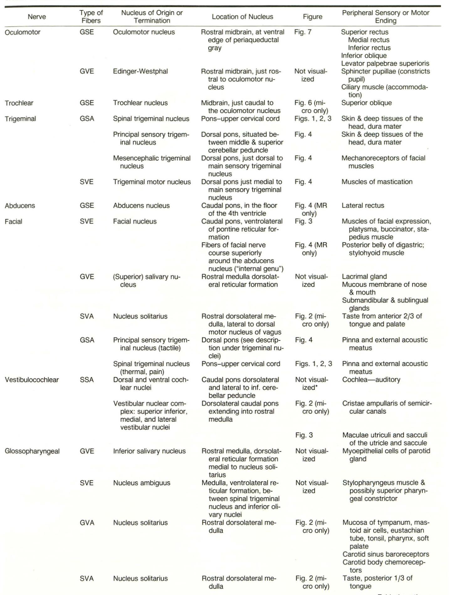 Anatomy of the brainstem: correlation of in vitro MR images with ...
