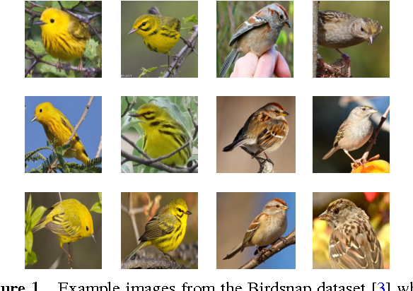Figure 1 for Fine-Grained Classification via Mixture of Deep Convolutional Neural Networks