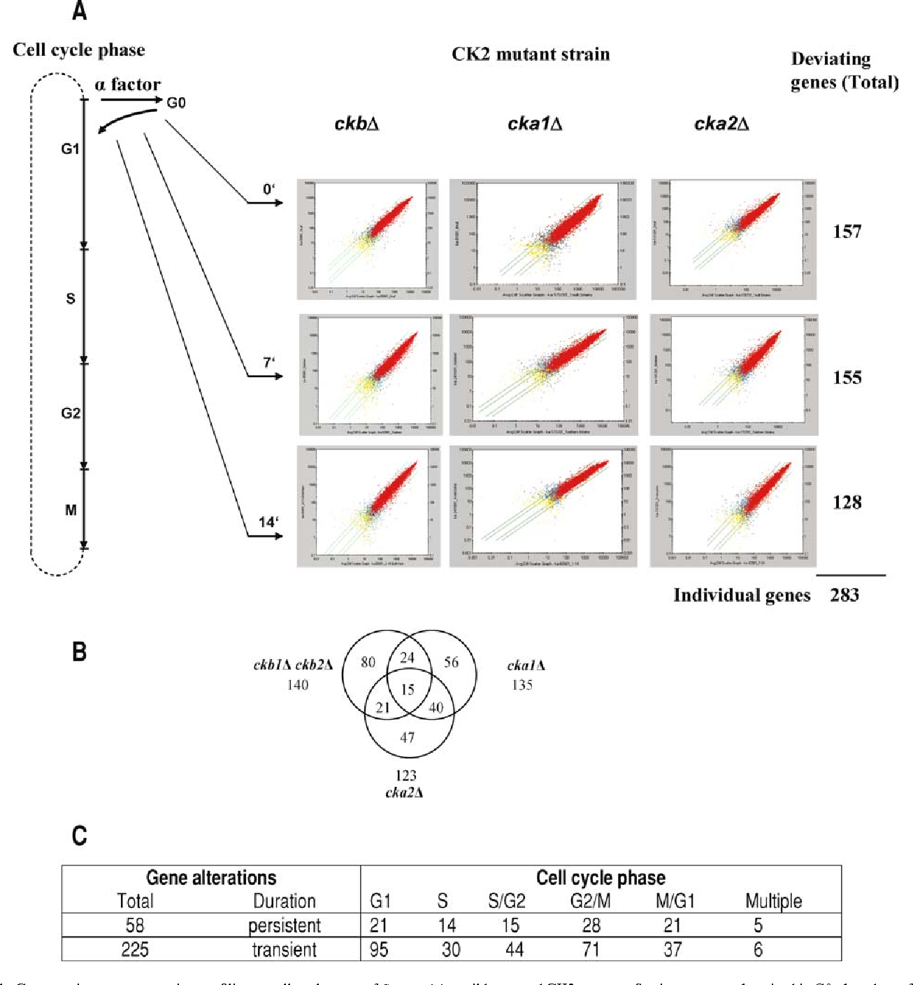 Protein kinase CK2 in gene control at cell cycle entry - Semantic