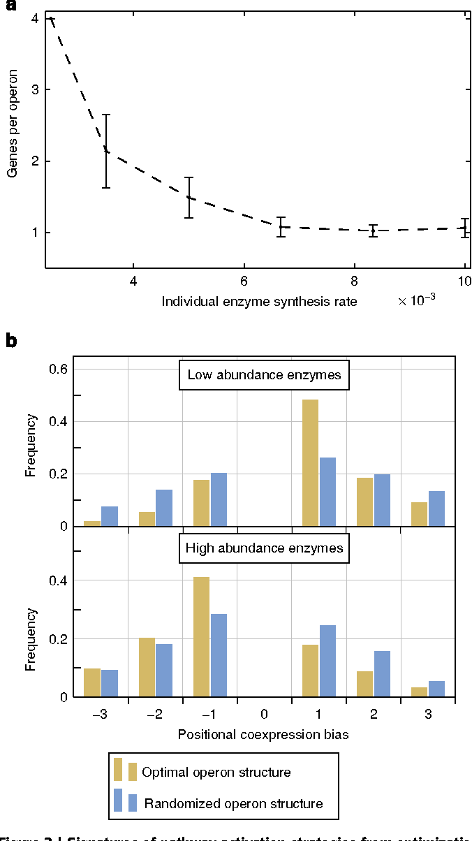 Figure 3   Signatures of pathway activation strategies from optimization runs. (a) Influence of individual enzyme synthesis rates on operon size.